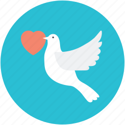 bird, dove with rose, flying dove, holy gift, religious greeting, valentine's greeting icon