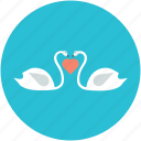 animal love, greetings, in love ducks, kissing ducks, two ducks icon