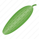 cucumber, diet, food, health, vegetable, vegetarian, vitamin icon
