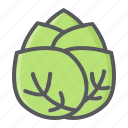 cabbage, diet, food, health, vegetable, vegetarian, vitamin icon