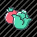 cabbage, tomato, vegetable icon