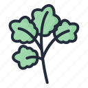 coriander, herb, vegetable, food, healthy