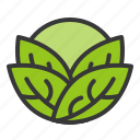 cabbage, food, fresh, green, vegan, vegetable, vitamin icon