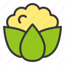 cauliflower, food, fresh, green, vegan, vegetable, vitamin icon