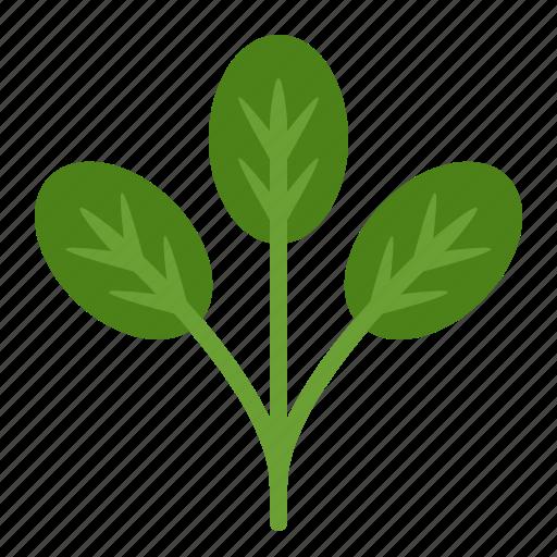 crop, farming, fresh, organic, spinach, vegetable icon