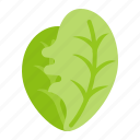 crop, farming, fresh, lettuce, organic, vegetable icon