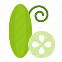 crop, farming, fresh, organic, vegetable, zucchini icon