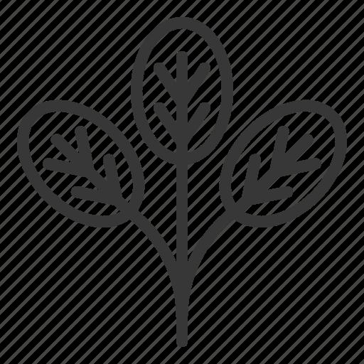 crop, fresh, organic, spinach, vegetable icon