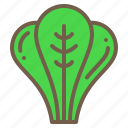 food, organic, spinach, vegetable icon