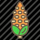 corn, food, organic, sweet, vegetable icon