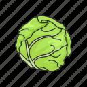 cabbage, food, healthy, plants, vegetable, veggies icon