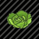 veggies, healthy, plants, cabbage, vegetable, food, leafy icon