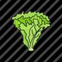 veggies, plants, vegetable, food, lettuce, leafy icon
