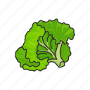food, healthy, leafy, lettuce, plants, vegetable, veggies icon
