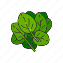 food, healthy, leafy, plants, spinach, vegetable icon
