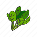food, healthy, leafy, plants, spinach, vegetable, veggies icon