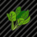 food, healthy, leafy, plants, spinach, vegetable, veggies