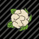 greens, healthy, plants, broccoli, vegetable, food, leafy icon