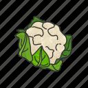 broccoli, food, greens, healthy, leafy, plants, vegetable icon