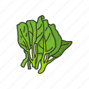 veggies, kale, healthy, plants, vegetable, leafy icon