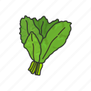 food, healthy living, kale, leafy, plants, vegetable, veggies icon
