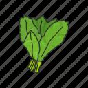 veggies, kale, plants, vegetable, healthy living, food, leafy icon