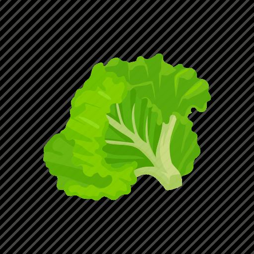 food, leafy, lettuce, plants, vegetable, veggies icon