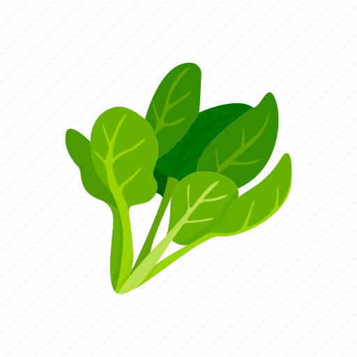 food, healthy, plants, spinach, vegetable, veggies icon