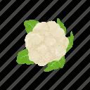leafy, plants, broccoli, vegetable, greens, veggies icon