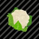 broccoli, food, greens, leafy, vegetable, veggies icon