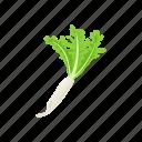 healthy, plants, raddish, vegetable, veggies icon