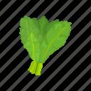 food, kale, leafy, plants, vegetable, veggies icon