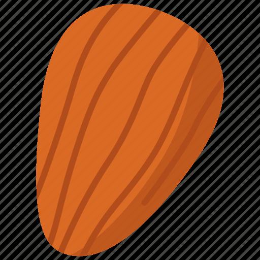 almond, food, nut icon