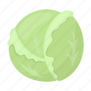 agriculture, food, garden, plant, vegetable, vegetables, white cabbage icon