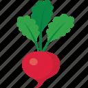 radish, red icon