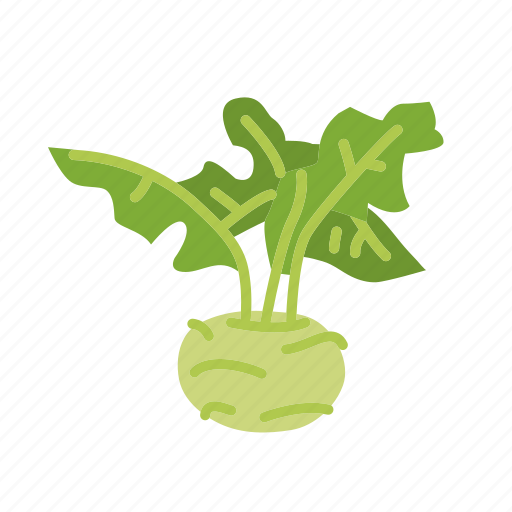 farm, food, kohlrabi, organic, vegetable, vegetarian icon