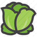 cabbage, salad, vegetables icon