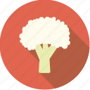 cabbage, cauliflower, food, fresh, groceries, vegetable icon