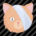 cat, animal, bandage, head, vet clinic, medicine