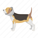 animal, pet, collar, vet clinic, dog, medicine icon