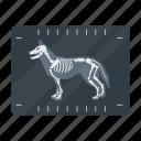 animal, dog, medicine, snapshot, vet clinic, x-ray icon