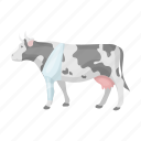 animal, cow, medicine, pet, vet clinic, zoo