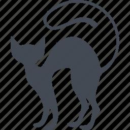 animal, cat, kitty, veterinary icon