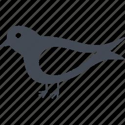 bird, feathered, tit, veterinary icon