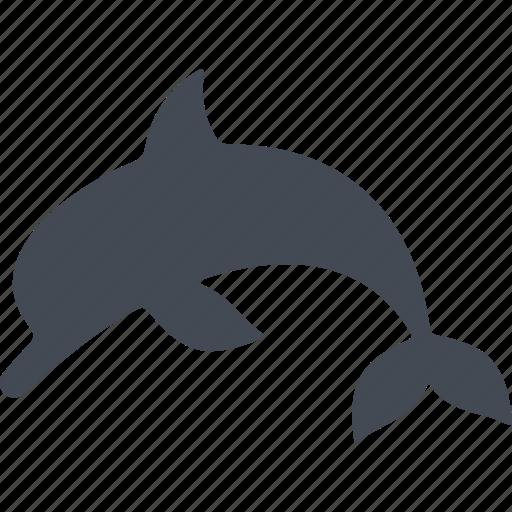 dolphin, marine animal, ocean, veterinary icon