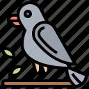 avian, bird, crow, ornithology, raven