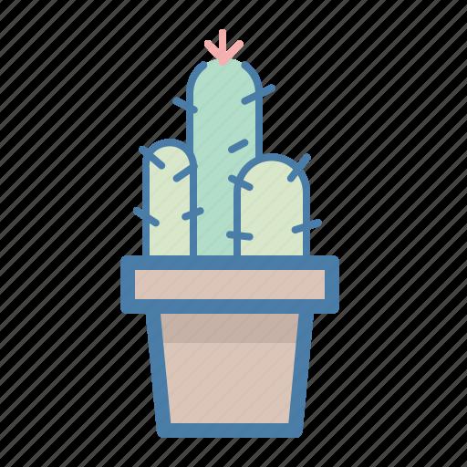 cacti, cactus, decor, decoration, flower, home, plant icon