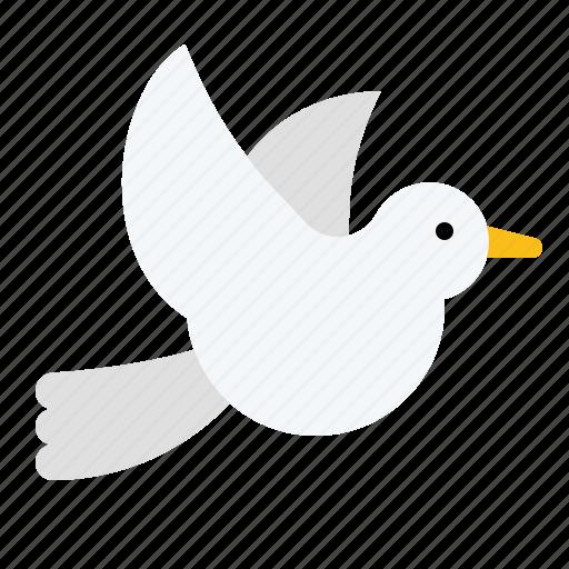animal, bird, dove, love, pigeon icon