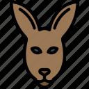 wallaroo, wild, face, animal, kangaroo icon