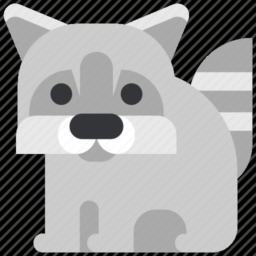 animal, beast, fauna, raccoon, wild, wildlife, zoo icon